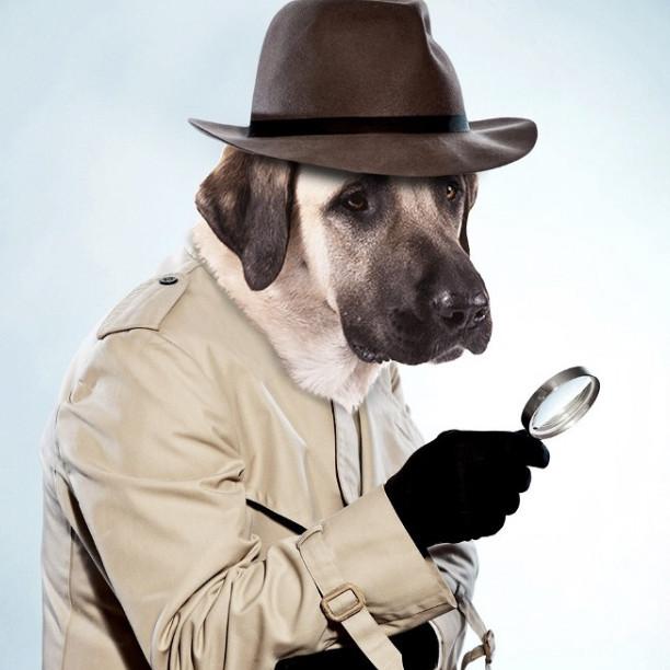 Murdog Mysteries
