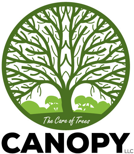 Canopy Arbor Care