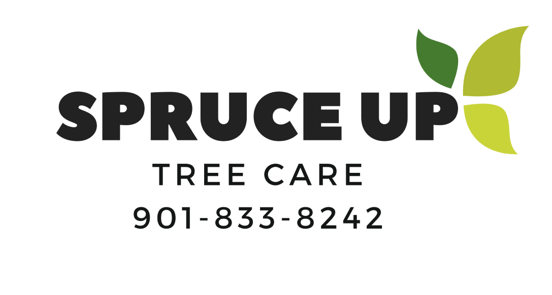 Spruce Up Tree Care