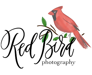 Red Bird Photography